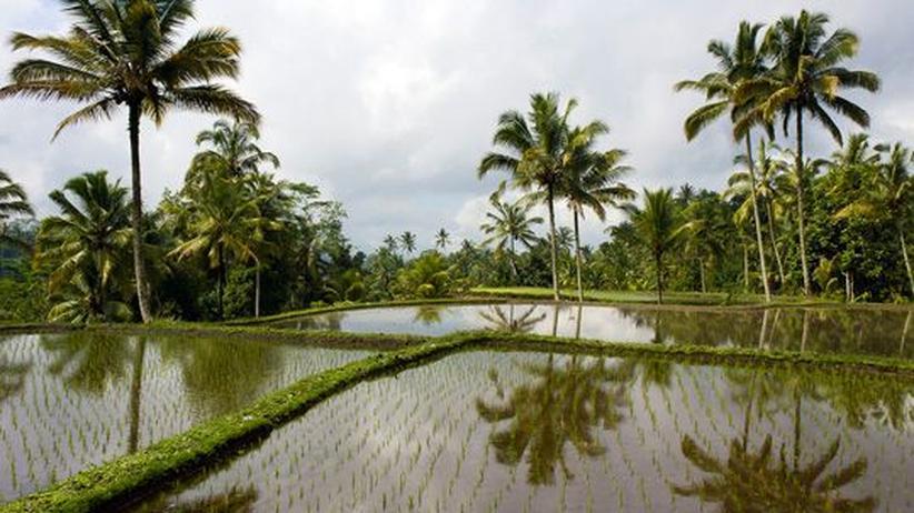 Bali: Paradies mit Brandspuren