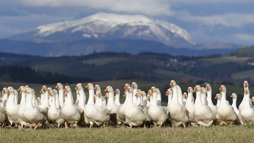 Burgenland: Es lebe die Gans!