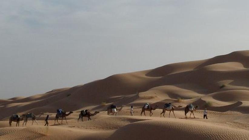 Kameltrekking: Abenteuer in der Sandkiste
