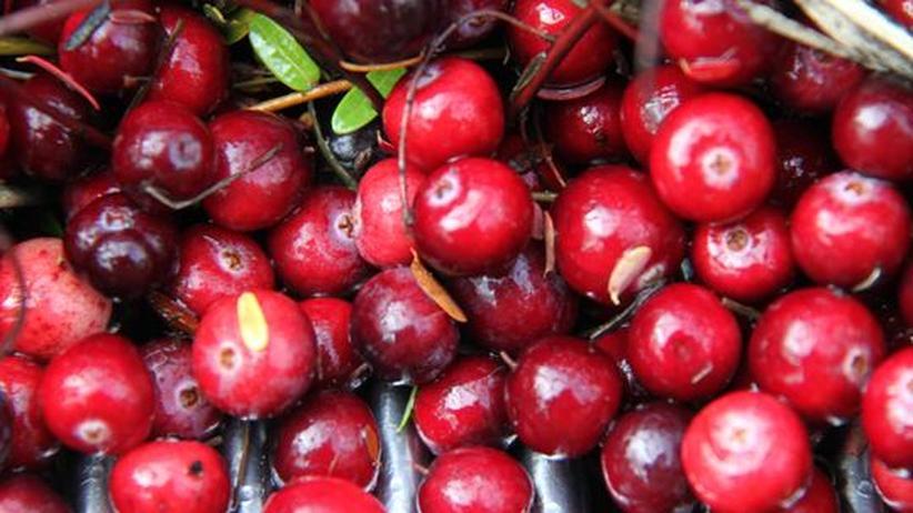 Cranberries : Kugelrotes Strandgut