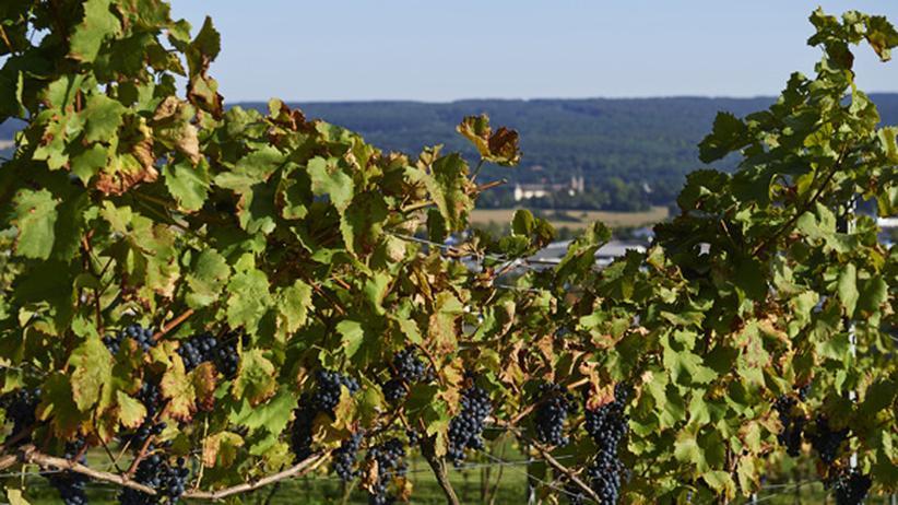 Nordrhein-Westfalen: Wein kommt jetzt von der Weser