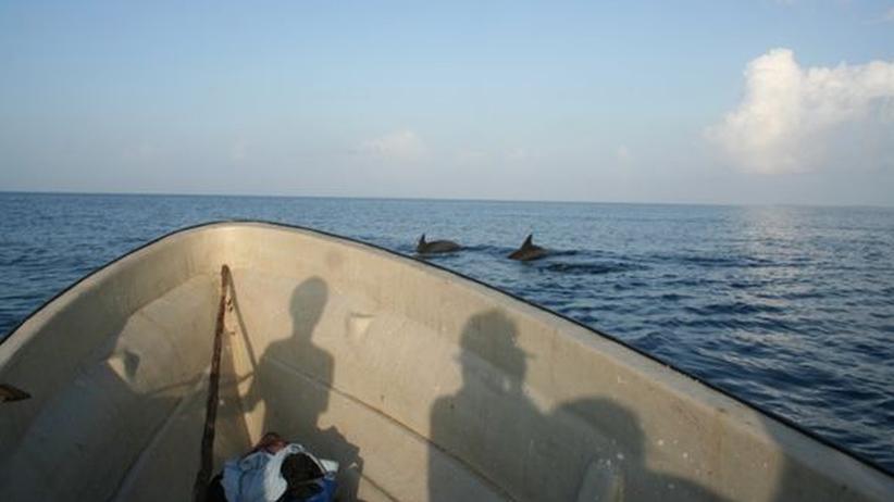 Die Delfine lassen sich kurz in der Nähe der Boote sehen.
