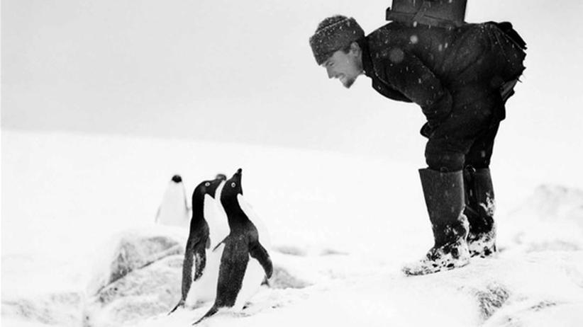 Begegnung mit Adelie-Pinguinen
