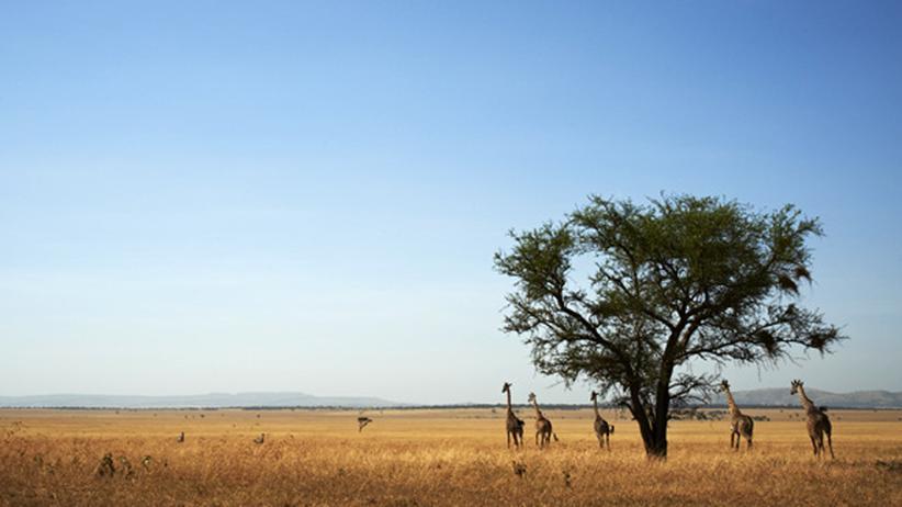 Tansania: Savanne mit Sahne