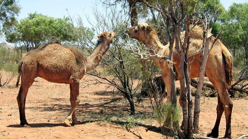 Australien: Von wegen Kängurus!