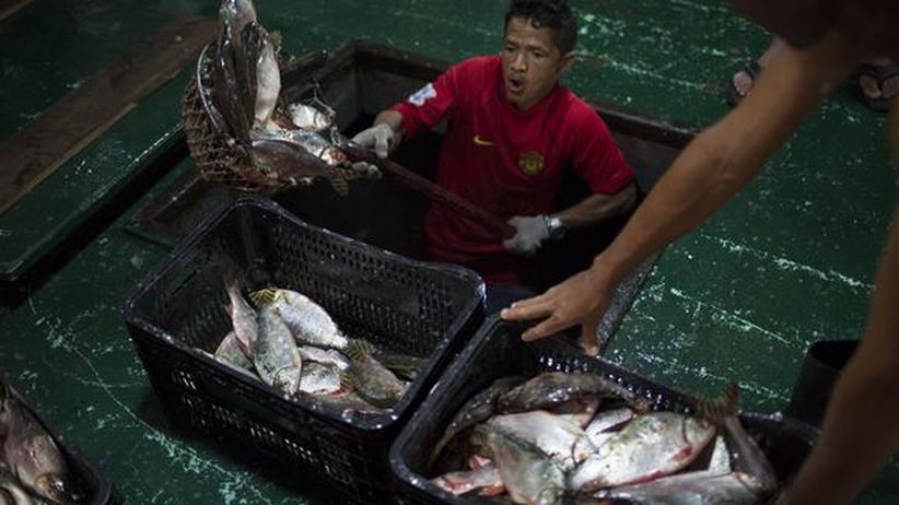 WM-Austragungsorte Manaus Fisch