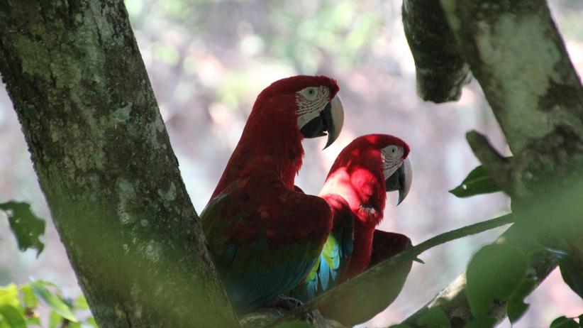 Brasilien: Sehr, sehr Bonito