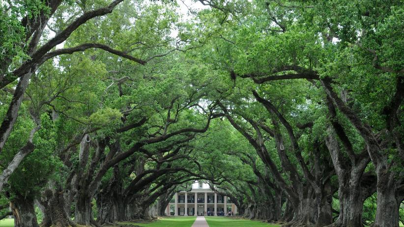 Louisiana: Das Hollywood der Südstaaten