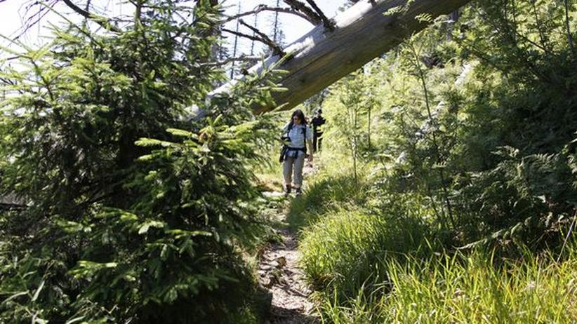 Schwarzwald: Nationalpark Baiersbronn