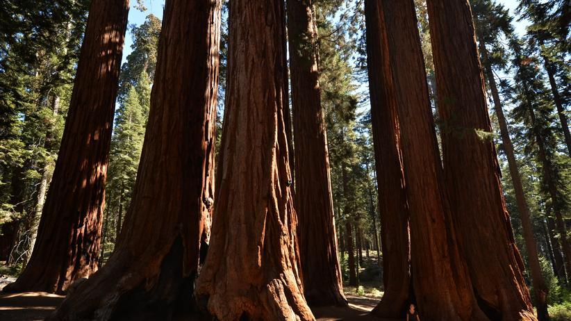 Reisen, Kalifornien, Naturschutzgebiet, Wald, USA, Kalifornien