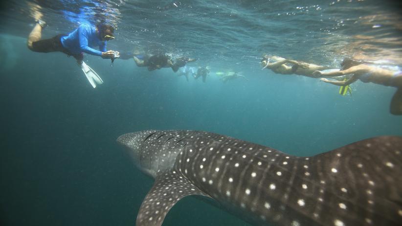 """Malediven: """"Wir sind hier, weil wir die Vielfalt des Meeres schätzen"""""""