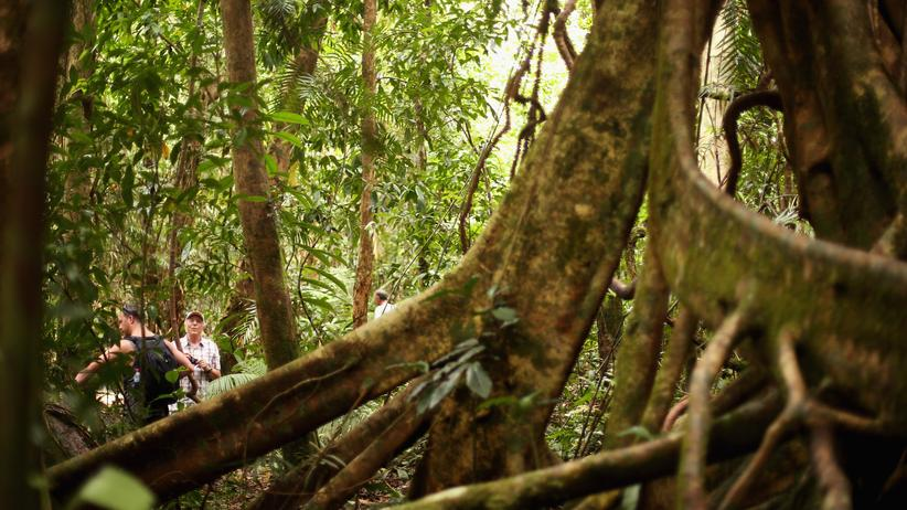 Regenwald rund um Cairns