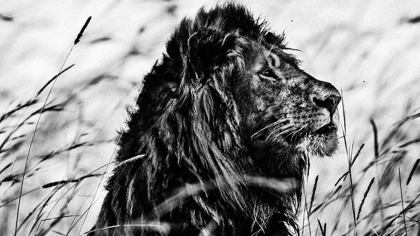 Afrika: Die gewaltige Ruhe der Wildnis