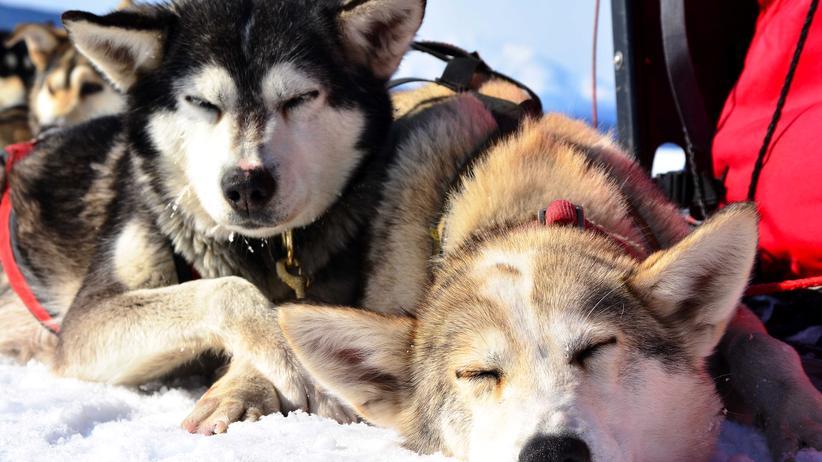 Reisen, Mongolei, Hundeschlittenrennen, Reise, Reiseziel, Abenteuerurlaub, Mongolei, Alaska