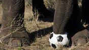 Unsere Vorstellung vom afrikanischen Fußball ist von Klischees geprägt