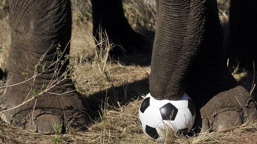 """Afrika: """"Im TV-Spot brüllt Eto'o wie ein Tier"""""""