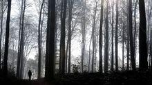 Spaziergang in einem Wald