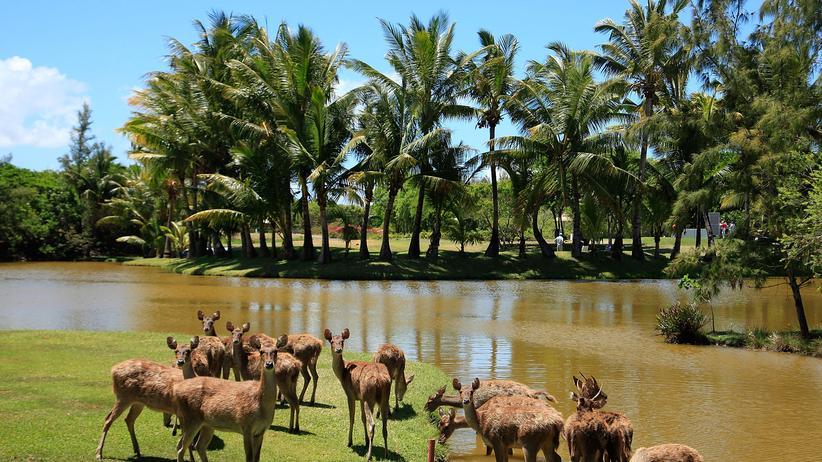 Ein Golfplatz auf Mauritius