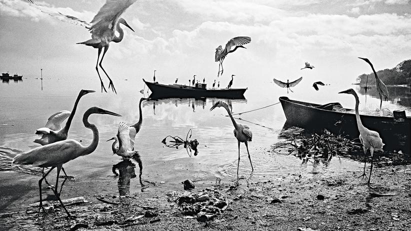 Rio de Janiero: Schmutzige Idylle: Fischerboote in Guanabara, wo die Segler bald um Medaillen kämpfen
