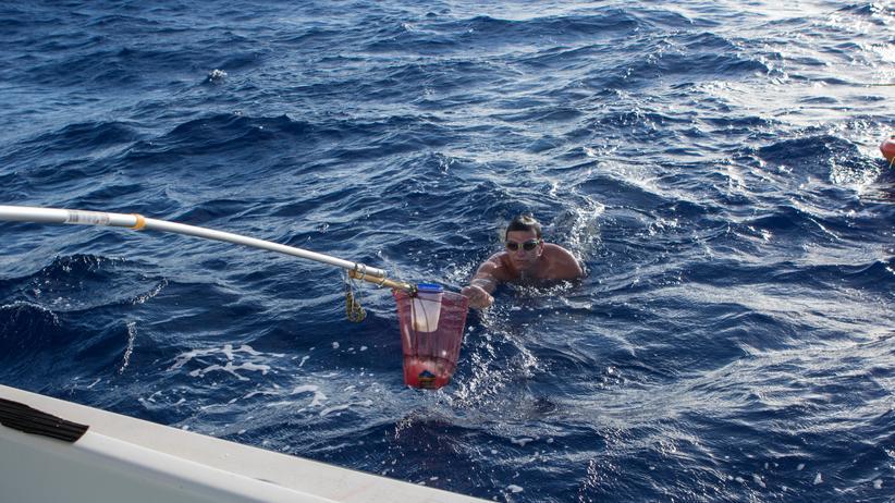 Extremschwimmen: Verpflegt wird Wiersig auf seinen stundenlangen Trips durch die Meere über ein Beiboot.