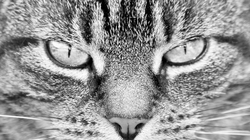 Juniorstudium: Warum die Katze den Spiegel erfand