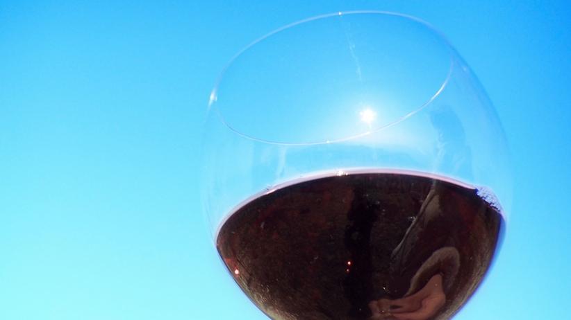 Weinbau-Studium: Sechs Semester Wissensdurst