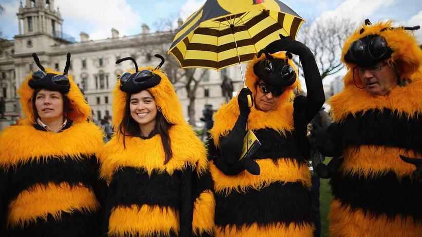 Beat the Prof: Kann man Bienen dressieren?