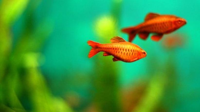 Studium Generale: Im Aquarium fühlen sich Fische wohler als im Ozean