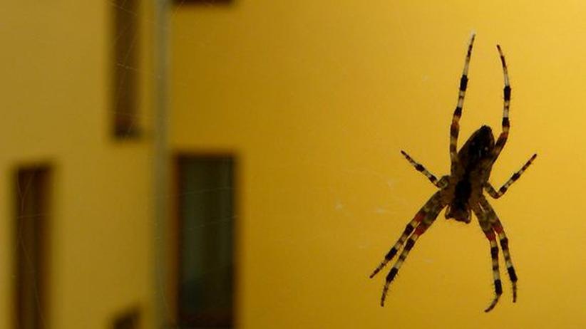 Insekten: Ameisen mit Backpulver bekämpfen bis sie platzen