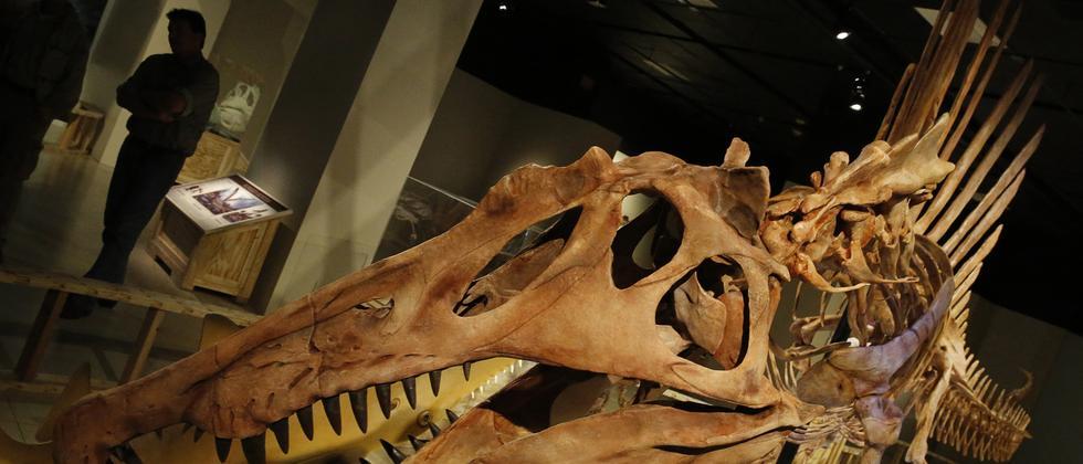 Paläontologie: Die zufällige Entdeckung des Flussungeheuers