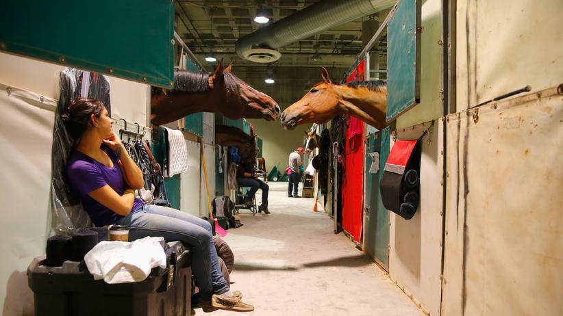 Was studieren: Einführung in die Pferdewissenschaften