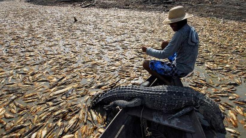 Fischsterben entzieht die Lebensgrundlage: Fischer im Amazonas-Gebiet leiden bereits unter dem Klimawandel