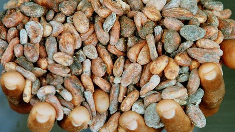 Für eine Handvoll Kakaobohnen: Viele Kosumenten wissen nichts über die widrigen Produktionsbedingungen. In vielen Ländern schuften Kinder, von leckerer Schokolade können sie nur träumen