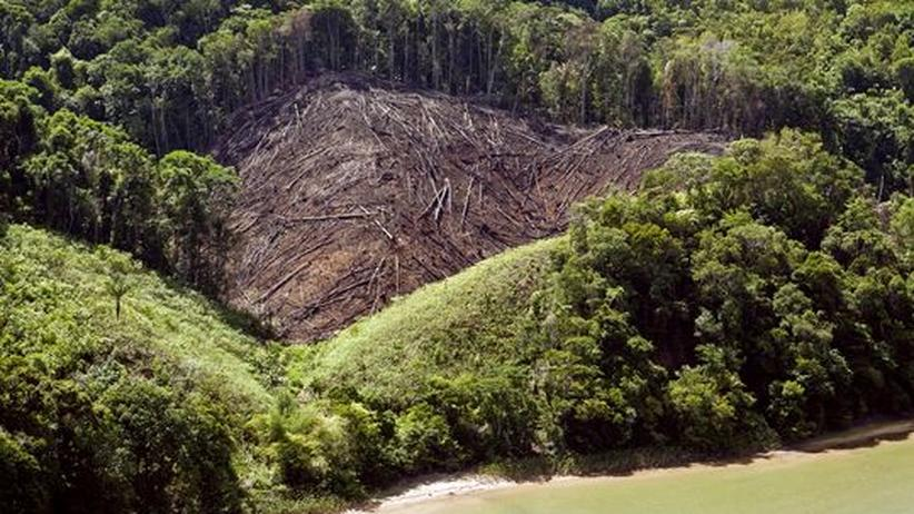 """Wald- und Klimaschutz: """"Kopenhagen kann zur Zerstörung der Urwälder beitragen"""""""