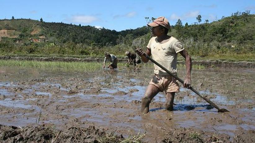 Grüne Wirtschaft: Viele Entwicklungsländer könnten von der Umstellung ihrer Landwirtschaft auf Ökolandbau profitieren, ist die Handelsorganisation der Vereinten Nationen überzeugt. Ökolandbau schone das Klima und steigere die Erträge