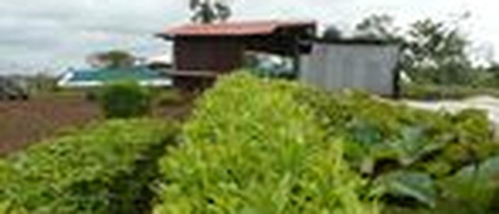 Baumschule von Bauminvest in Costa Rica