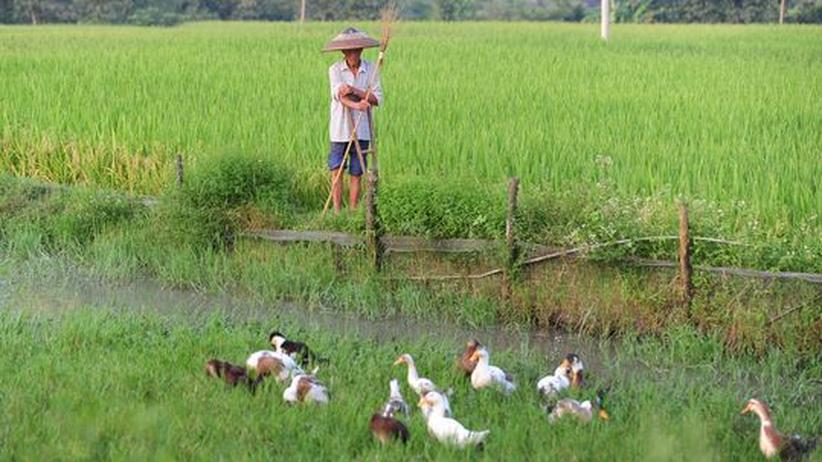 Welternährung: Zu viel Nahrung verrottet nach der Ernte