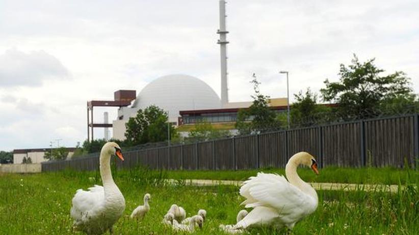 Atomausstieg: Schwäne vor dem Kernkraftwerk in Brokdorf