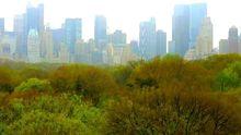 Blick auf New York, über die Baumwipfel des Central Park hinweg