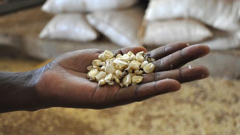 Nahrungshilfe: Mais in einem Lagerhaus in Jinja, Südostuganda. Klicken Sie auf das Bild, um mehr Fotos aus Uganda zu sehen.