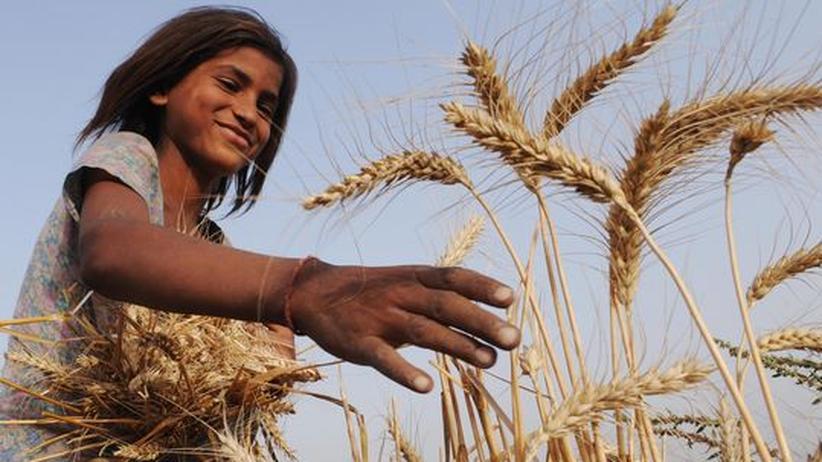 """Nahrungshilfe: """"Die USA helfen den eigenen Bauern statt den Hungernden"""""""