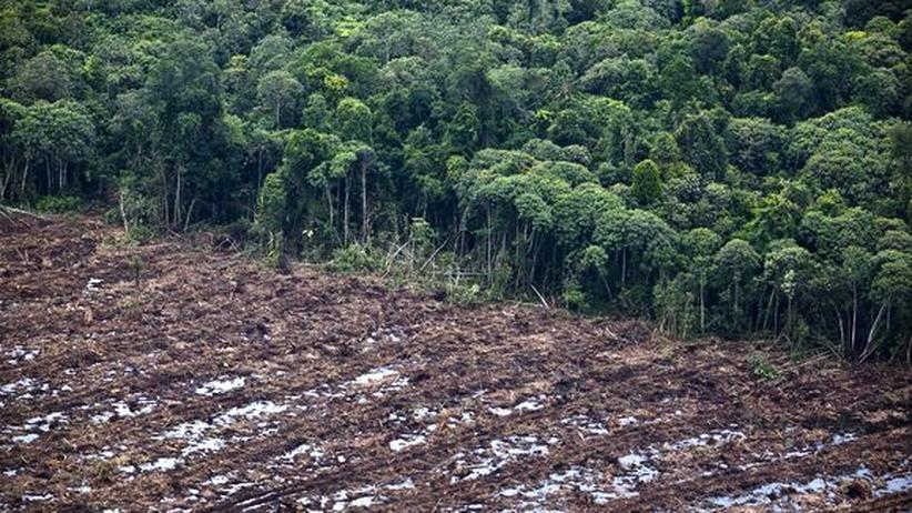 Kapitalismus: Abgeholzter Regenwald auf Sumatra, Indonesien