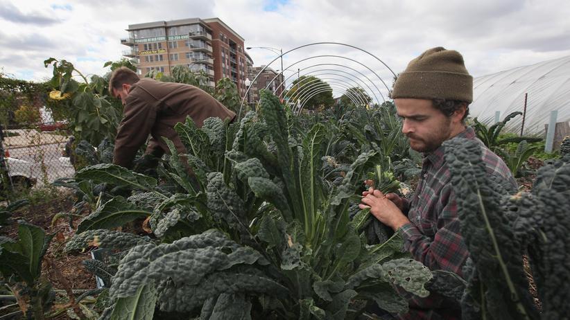Urban Farming: Stadtgärten sollen die Welt ernähren