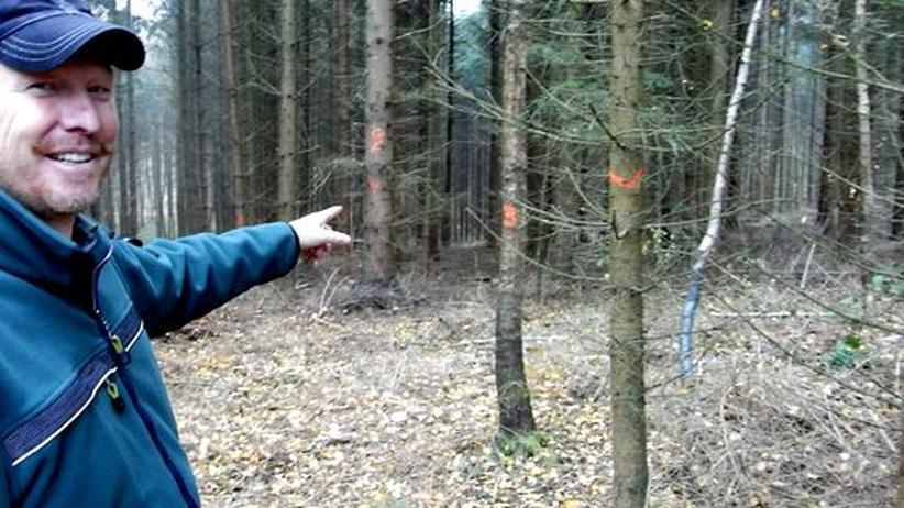 Waldmenschen: Ein Förster rettet den Mini-Wald