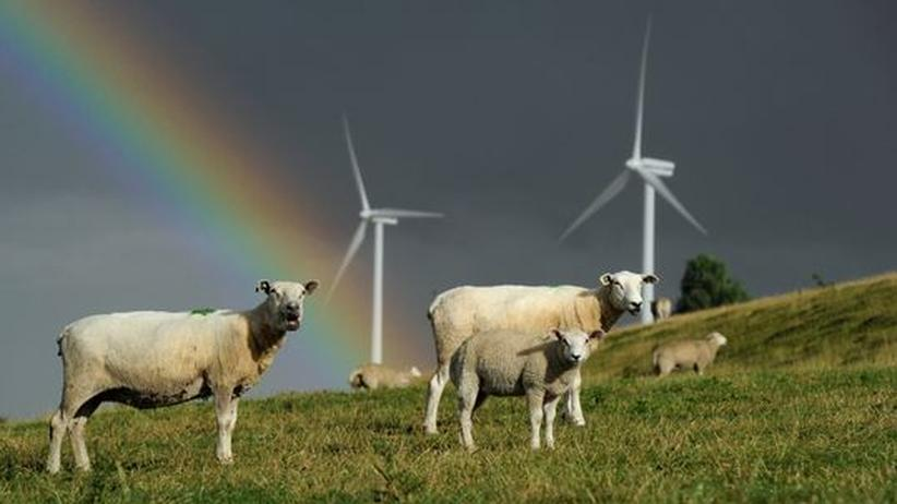 Energiewende: Windräder und Schafe bei Husum/Schleswig-Holstein