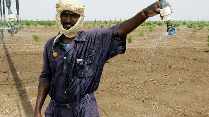 Land Grabbing: Angestellter auf einer Plantage in Al-Aylafoun, in der Nähe der sudanesischen Hauptstadt Khartoum (Archivbild)
