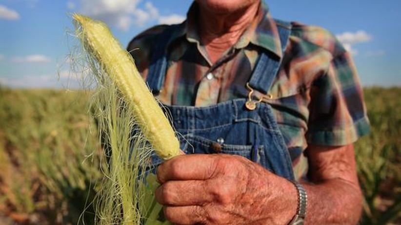Lebensmittelindustrie: Dürre lässt Getreidepreise deutlich steigen