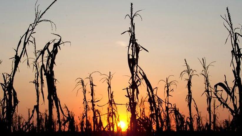 Naturkatastrophen: Bauern sollen sich gegen Dürre versichern