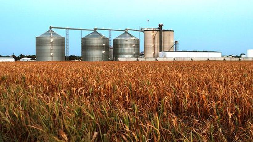 Nahrungskrise: Ein vertrocknetes Maisfeld vor einer Ethanolfabrik in Palestine, Illinois, USA.