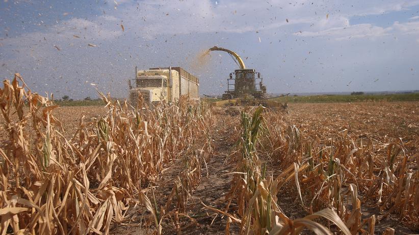 Lebensmittelpreise: Das gefährliche Spiel der Nahrungsspekulanten